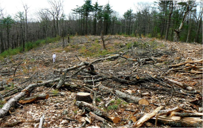 Clearcut in Massachusetts